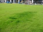 S3神戸震災復興記念公園状況視察091202 003.jpg