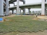s1神戸震災復興記念公園ポット苗経過090526 001.jpg