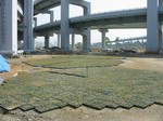 s1神戸震災復興記念公園ポット苗施肥(2回目)090520 001.jpg