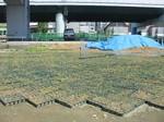 s2神戸震災復興記念公園ポット苗施肥(2回目)090520 002.jpg