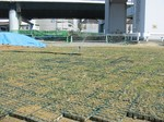 s3神戸震災復興記念公園ポット苗施肥(2回目)090520 003.jpg