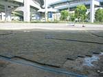 s3神戸震災復興記念公園ポット苗施肥090511 003.jpg