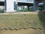 s4神戸震災復興記念公園ポット苗施肥(2回目)090520 004.jpg