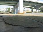 s4神戸震災復興記念公園ポット苗施肥090511 004.jpg