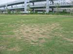 s4神戸震災復興記念公園状況視察090826 004.jpg