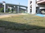 s5神戸震災復興記念公園ポット苗施肥(2回目)090520 005.jpg
