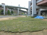 s6神戸震災復興記念公園ポット苗経過090526 006.jpg