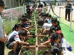 S24本山南緑のカーテン本山南小学校080604 024.jpg