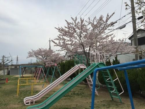 s153桜の宮170415IIMG_0153.jpg