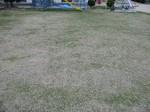 s7明石調査(明石幼稚園、播陽幼稚園)070319 007.jpg